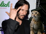 Keanu Reeves+cat