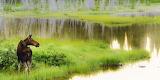 #Alberta Wetlands