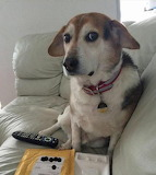 Dogs - 'Don't touch the remote'