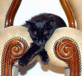 Between chairs
