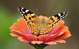 Animals wildlife nature (389)