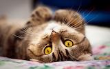 Cat-lie-bed