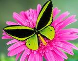 Le masque du papillon
