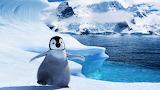 Arctic baby cute penguin ice