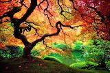 Trees-on-acid