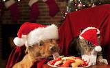 #We ARE Santa Claus!