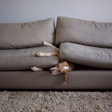 Maddie The Coonhound-More Like A Couch Hound