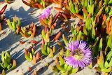Buckroe Beach San Diego California USA
