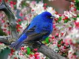 A bird in the color of indigo