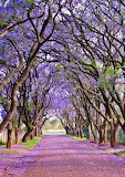 #Cullinan South Africa