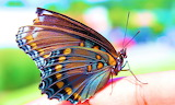 Bright Butterfly Photo