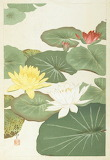 "Flowers tumblr dogstardreams ""Lotus Flowers"" ""Sôun Chikuso"""
