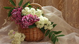 Basket, lilac, tulle, flowers