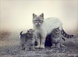 Gata y gatitos