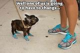 Dg in sneakers