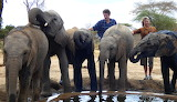 Hanging With Our Foster Babies ~ Ithumba. Kenya