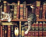 CAT ON SHELF