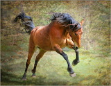 Spirited Horse...