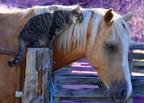 Cat schmoozing with horse
