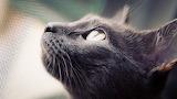 Cat-nets-animals