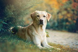 Shutterstock 1222413298 jwroww
