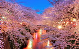 Canal Though Forest of Cherry Blossoms