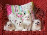 ☺♥ Cute x 4....