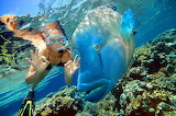 Kelly-w-Wally-barrier Reef