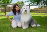 Old English Sheep Dog and His Human credit The Sun UK
