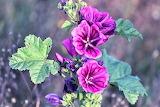 De mi jardin 710