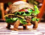 #Turtle Burger