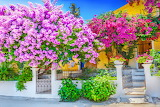 Greek House with Bougainvillea Trees