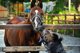 Cute Horse and Pony