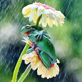 Two frogs under a flower to shelter from the rain-reddit