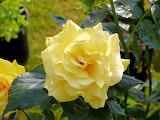De mi jardin 244