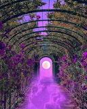 Purple misty greenhouse