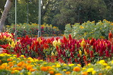 Park, colorful flowers, trees, nature