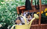 Aaaa-jong-katje-in-een-bloemengieter