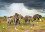 elephants and birds