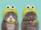 frog bonnets!