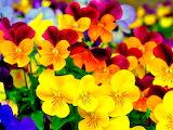 Girona Flowers Flors