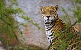 Animals wildlife nature (371)