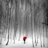 Red Umbrella snow