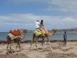 camels, Australian beach
