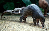 Armadillo and baby