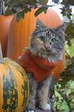 Autumn Cat & Pumpkin