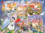 waterbird-magic