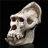 New Gorilla APE Figurine Skull Resin