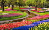 #Gorgeous Garden