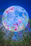 Full Moon Floral